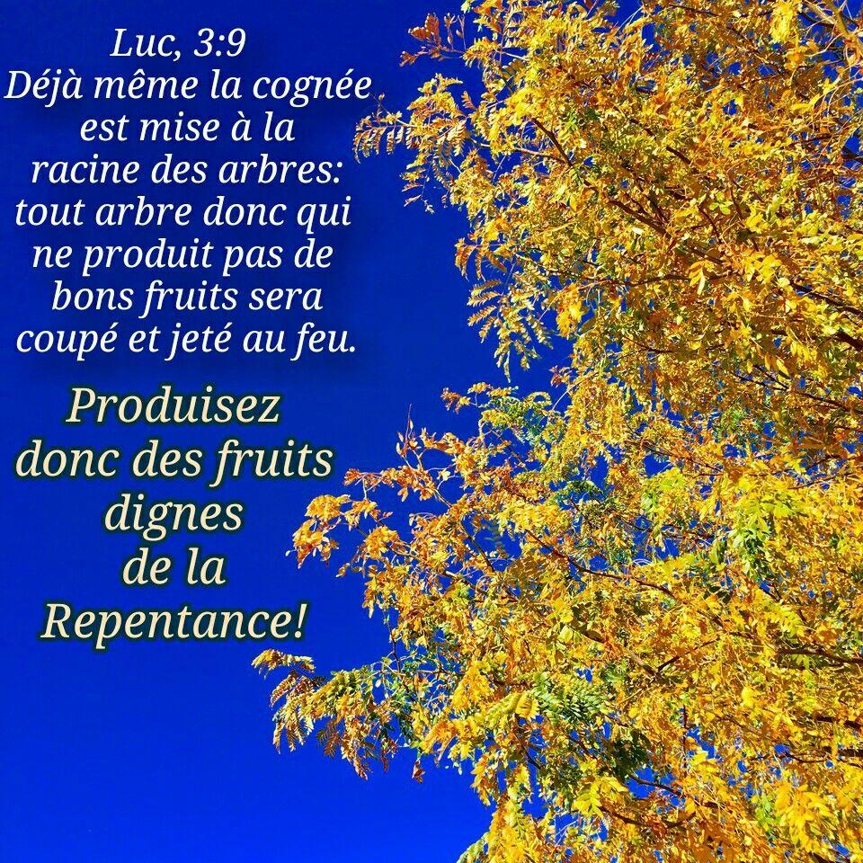 Épinglé par sauverparJesus sur Versets bible   Racines arbre, Versets de la  bible, Parole de dieu