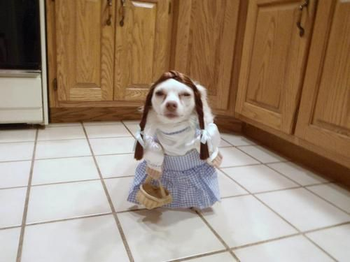 I am not Toto!! I'm Dorothy damn it!!!