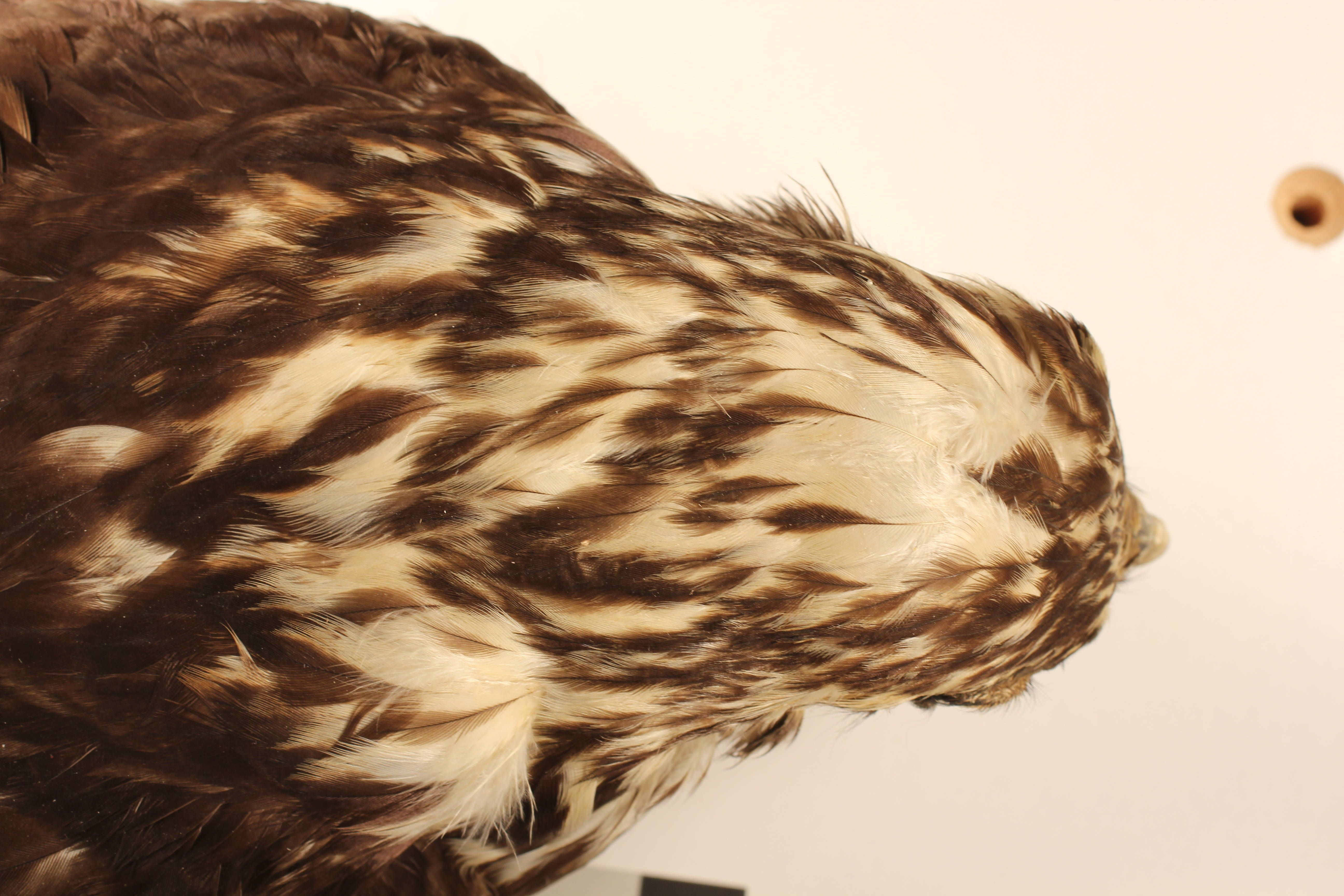 http://media.eol.org/content/2013/02/10/15/78150_orig.jpg  Smithsonian institution - division of birds