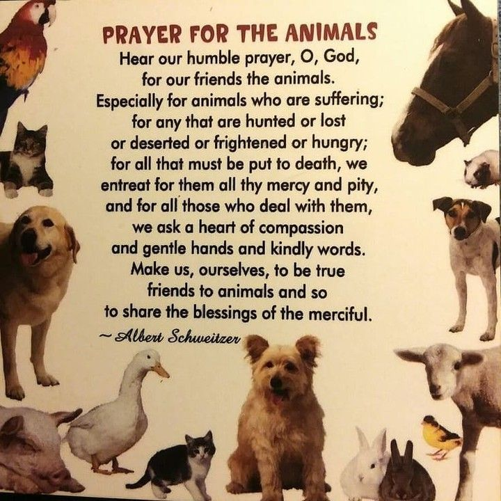 Art4Petz posted to Instagram Prayer for the animals more