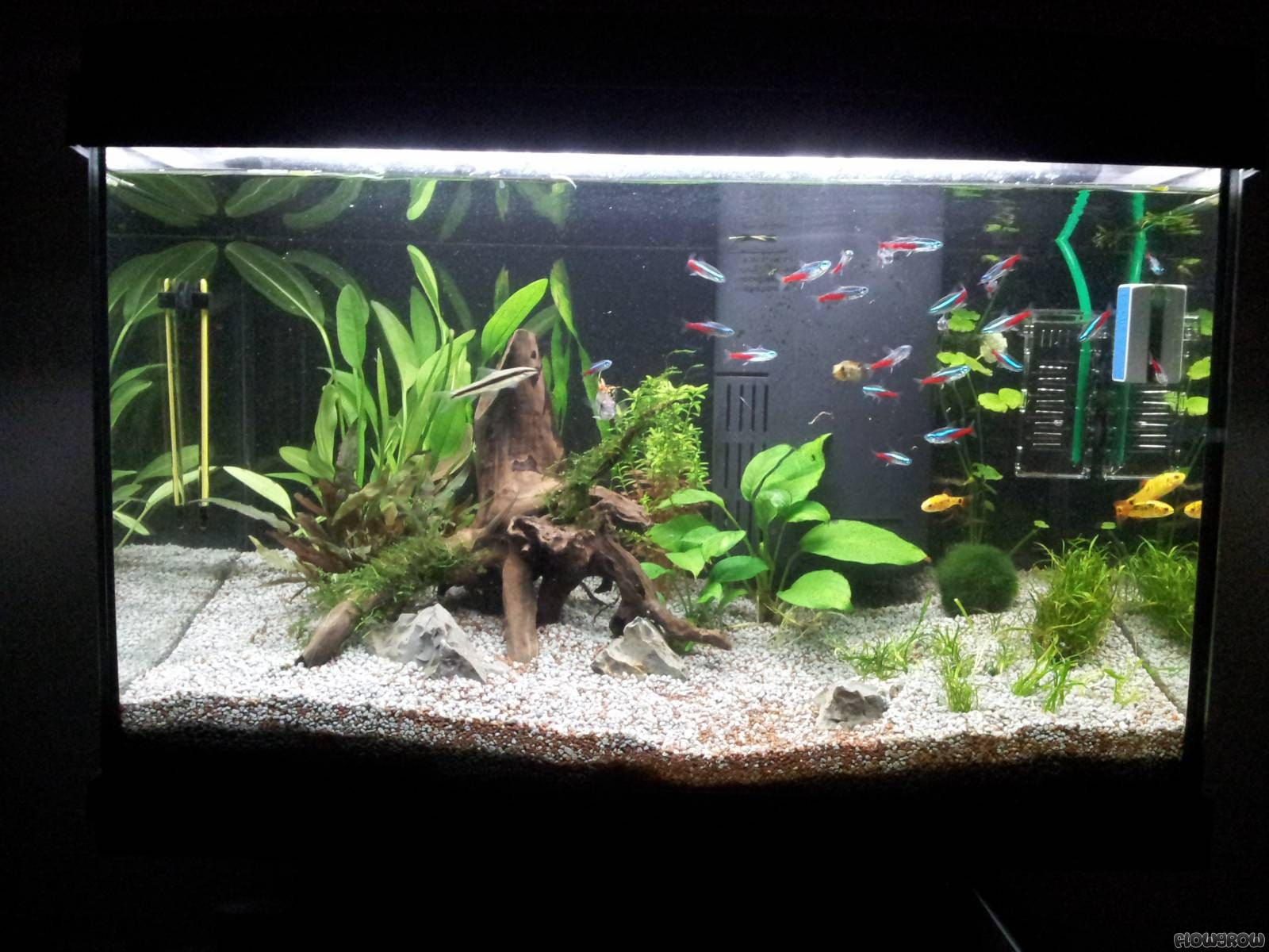 60l tetra aquarium 1600 1200. Black Bedroom Furniture Sets. Home Design Ideas