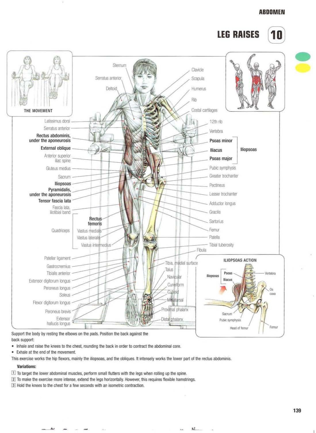Strength Training Anatomy 10 Leg Raises Abs Core Six Pack Flat
