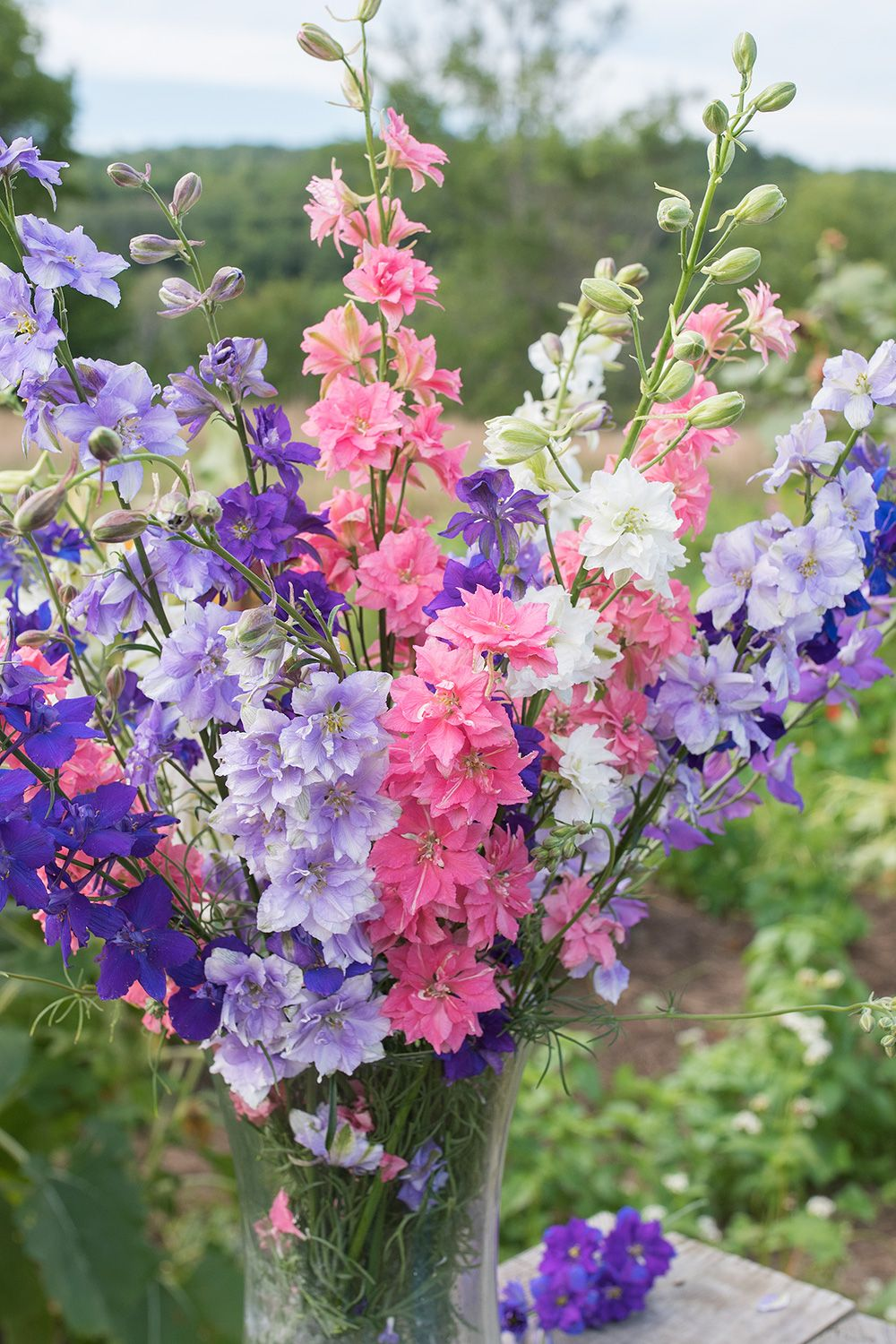 Larkspur Giant Imperial Consolida Ambigua Seeds Select Seeds In 2020 Larkspur Larkspur Flower Flower Farm