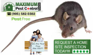 Http Ift Tt 1htkoxb Professional Rodent Extermination Http Ift Tt 1eizpl4 The Best In Town For Homes Mice Control Pest Control Rodent Control