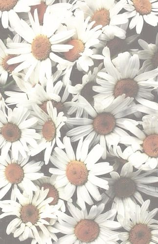 Daisy Flower Tumblr Wallpaper White