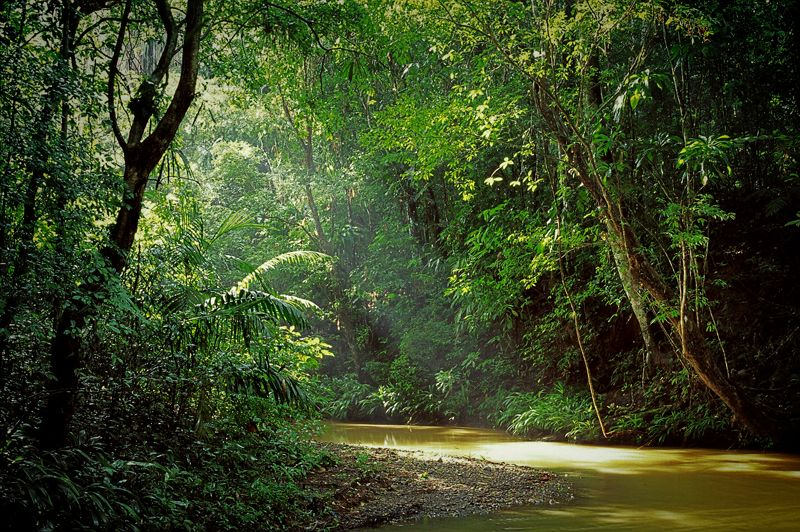 http://www.johnbrownimages.co.uk/wp-content/uploads/Rainforest-stream-Panama.jpg