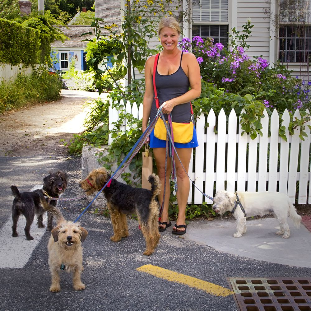 Wendy Loughlin And The West End Terriers Of Point Street Pet Friendly Hotels Provincetown Hotels Provincetown