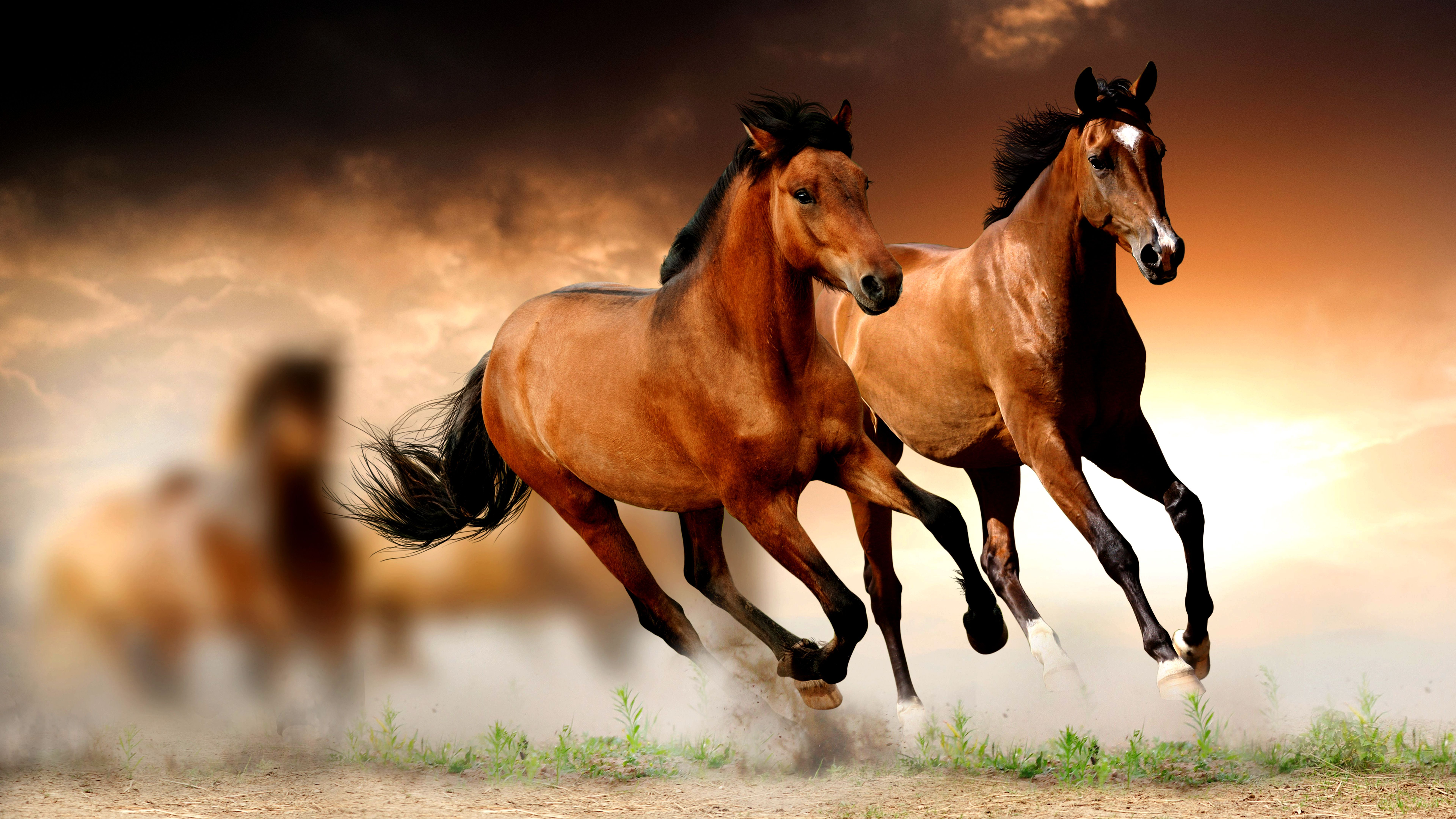 Freenom World Horse Wallpaper Horses Beautiful Horses