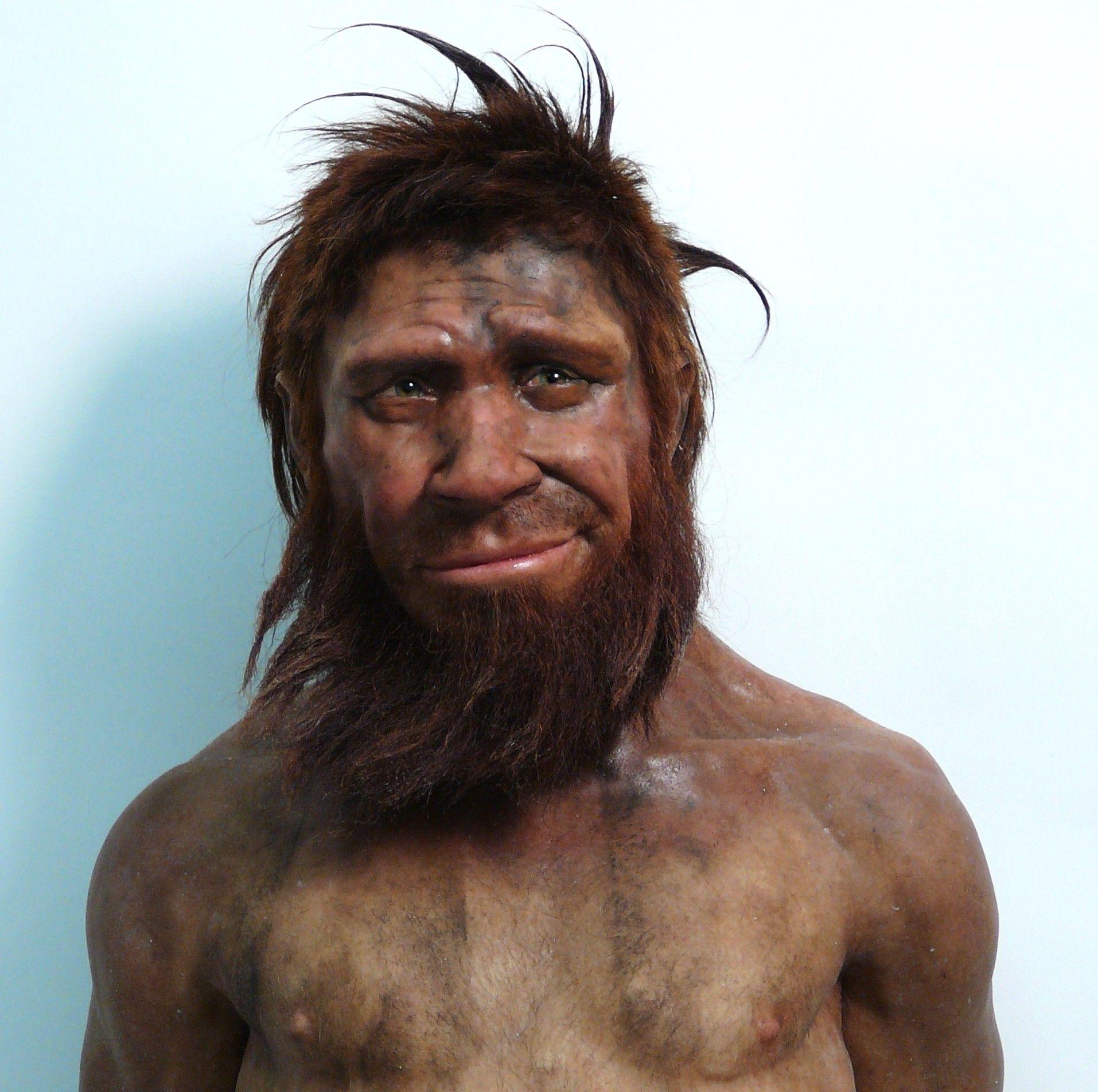 facial reconstruction neanderthal spy - Google Search   Human ...