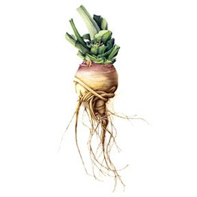 Notecards by Lara Call Gastinger.  Root veggies are sexy!