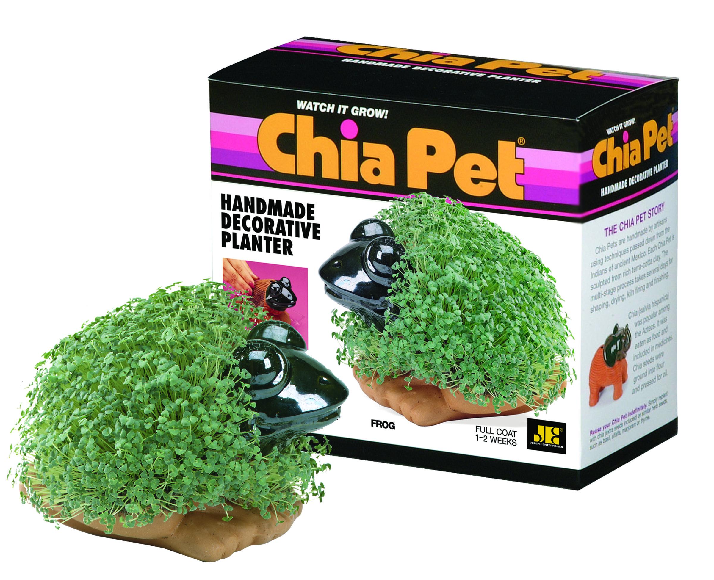 Chia Frog Chia Pet Pet Frogs Pet Turtle