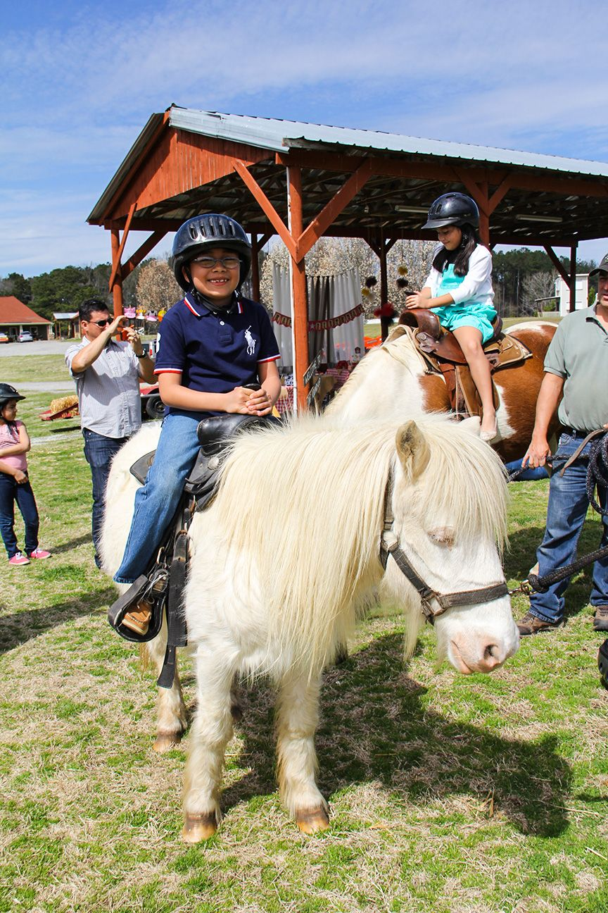 Pin On Princess Pony Birthday Party Ideas