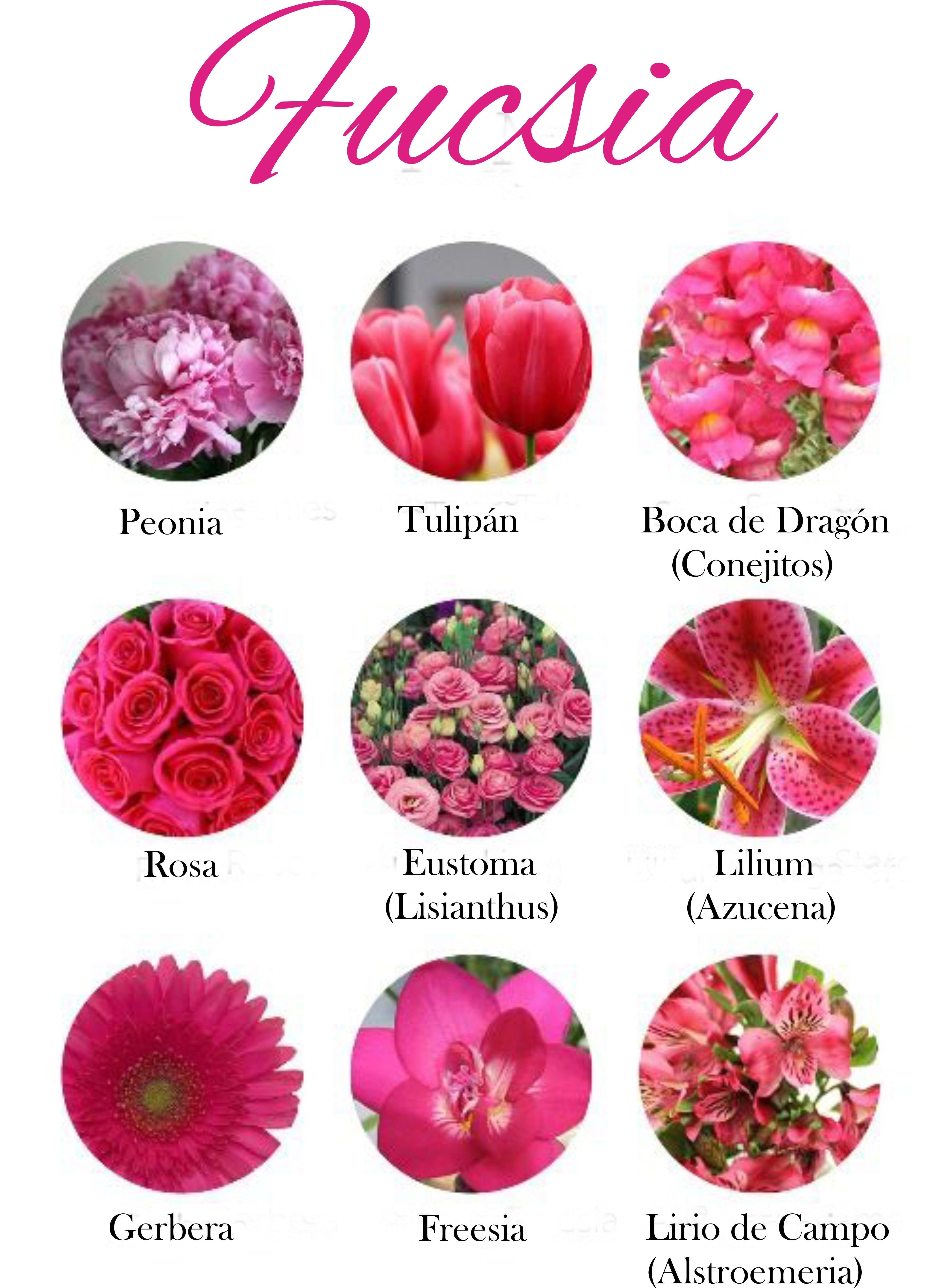 Flores de color fucsia. Fuchsia flowers. | flores | Pinterest ...