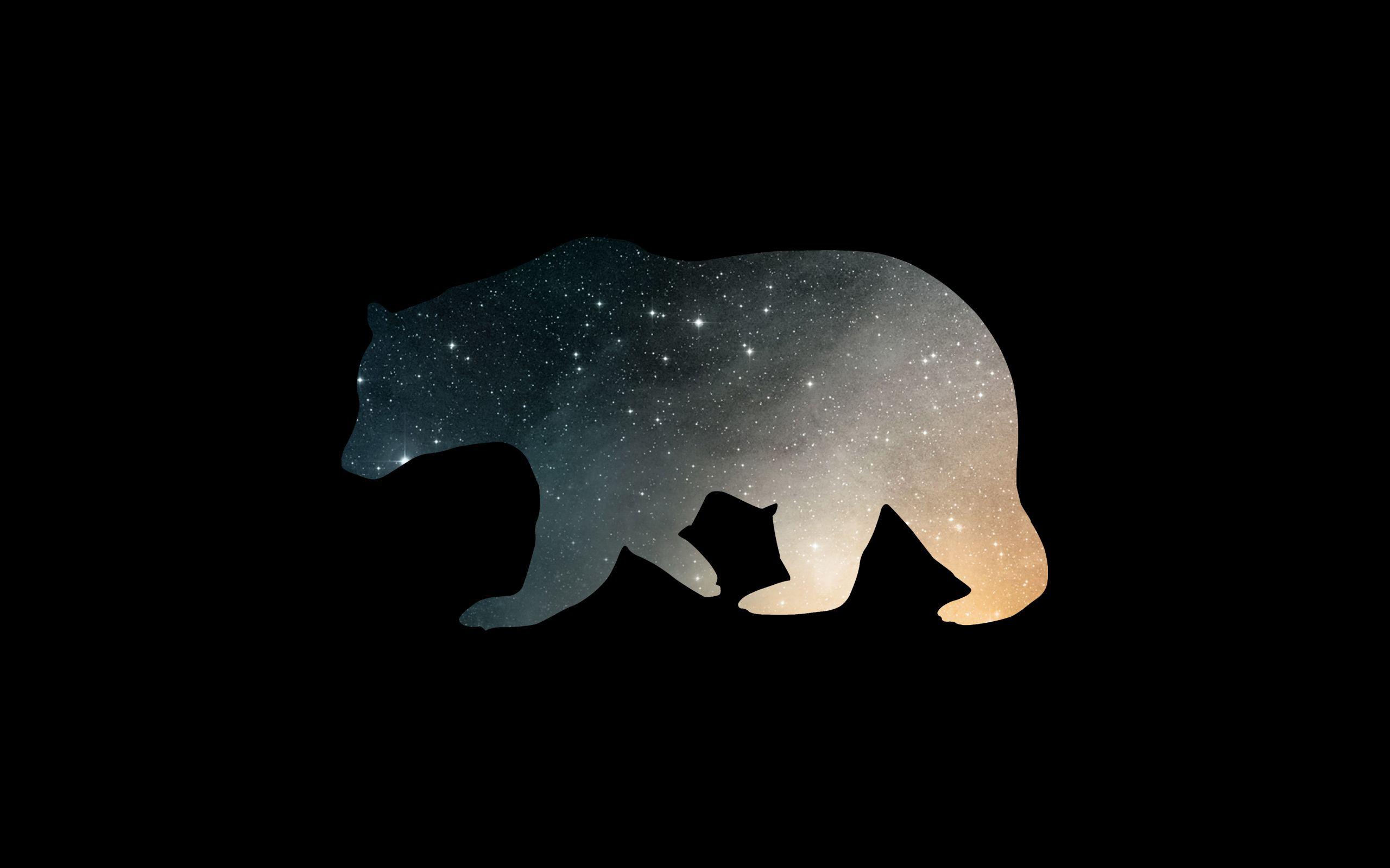 Minimal Bear Wallpapers 2560x1600 Bear Wallpaper Hd Wallpaper Wallpaper
