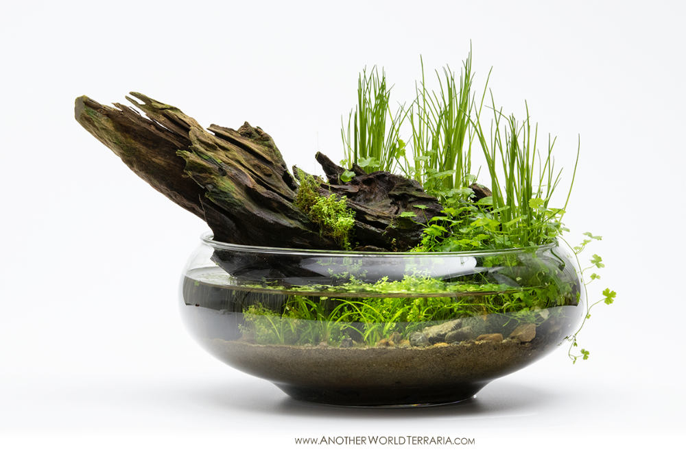 A Wabi Kusa In A Glass Bowl The Primary Hardscape Element Is Malaysian Driftwood Which Is Supplemented With S Dish Garden Indoor Water Garden Terrarium Plants