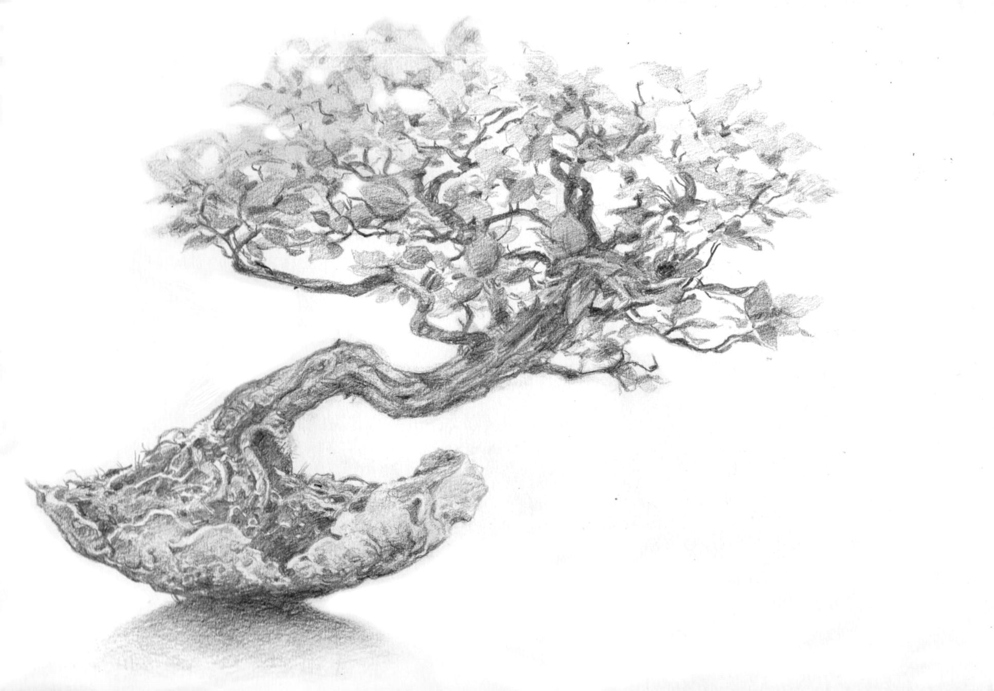 Bonsa juju pinterest bonsa crayon et encre - Dessin arbre chinois ...