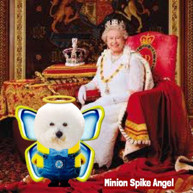 Minion Spike Angel with Queen Elizabeth II #spikebichon