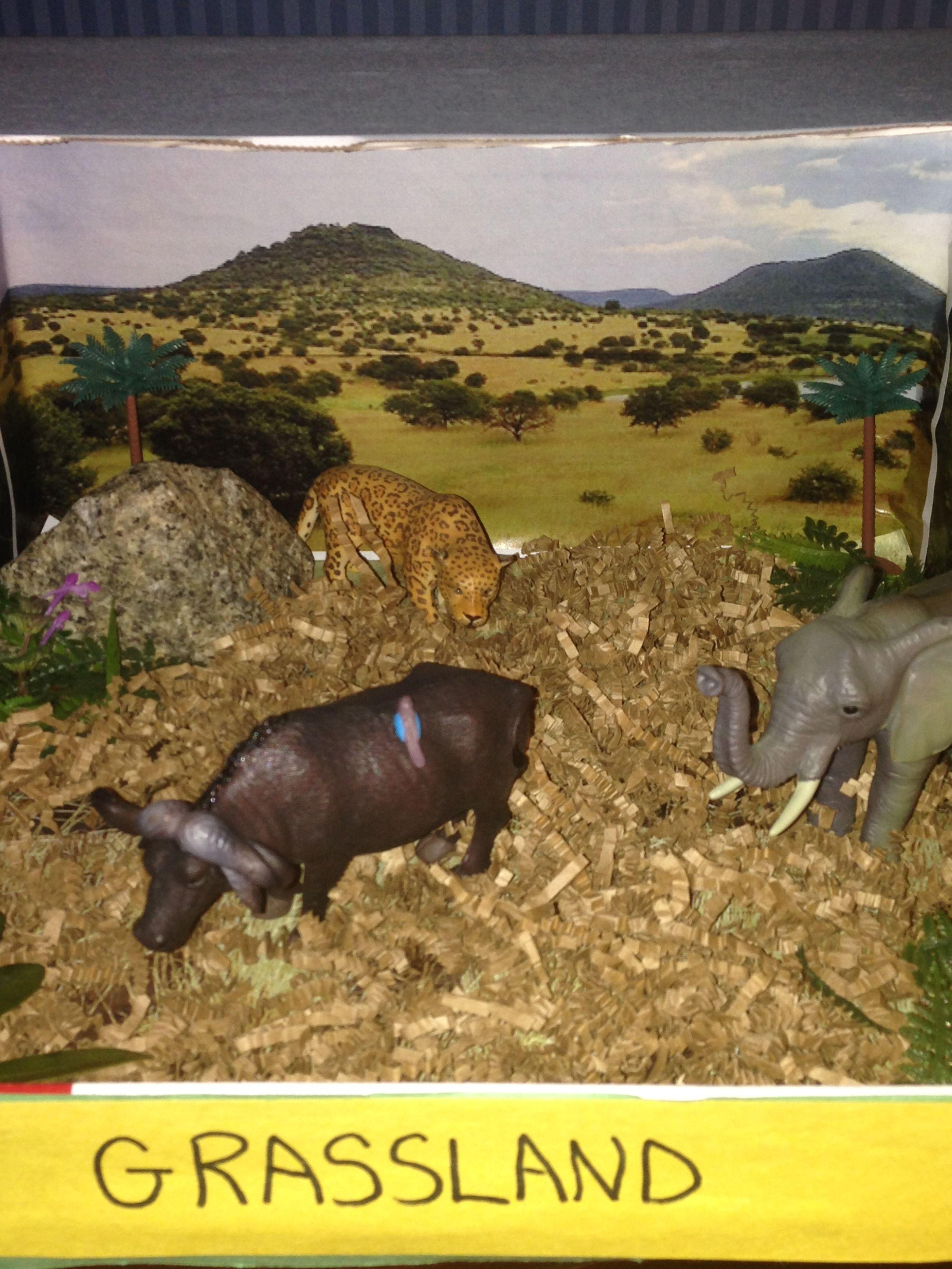 Grassland Biome Diorama
