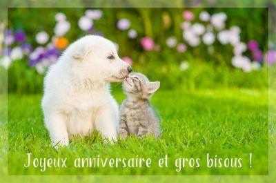 Cartes Virtuelles Joyeux Anniversaire Gratuites Joliecarte Com En 2020 Anniversaire Chien Joyeux Anniversaire Chats Animales