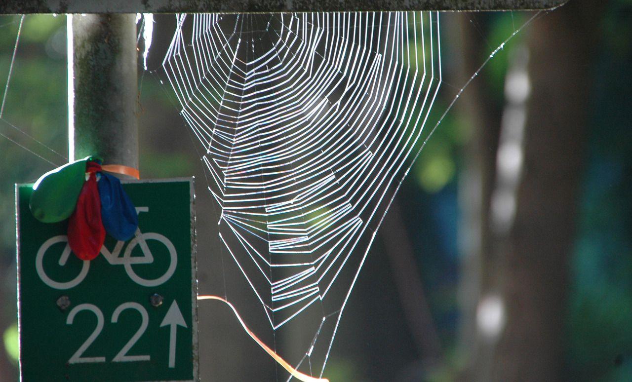 spinnennetz  spinnennetz spinne