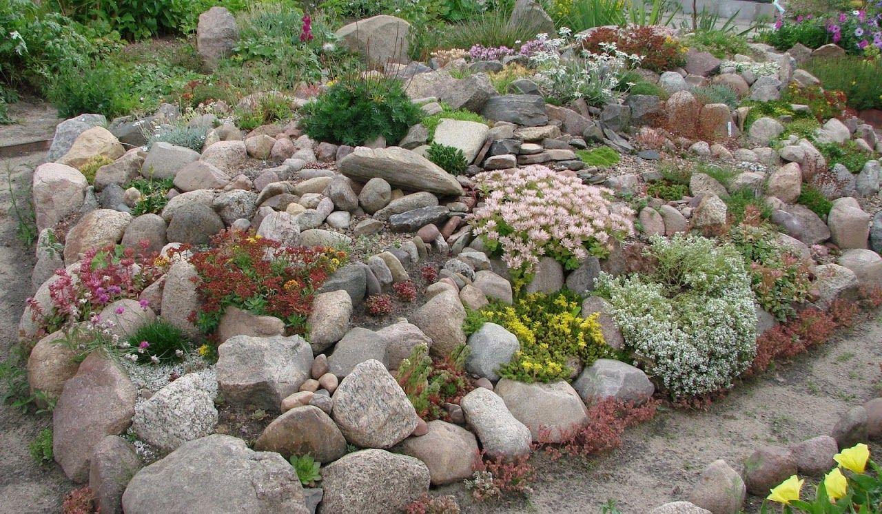 Forum Ogrodnicze Oaza Topic Skalniak I Kamienie U Piotrka 1 4 Plants Outdoor Outdoor Decor