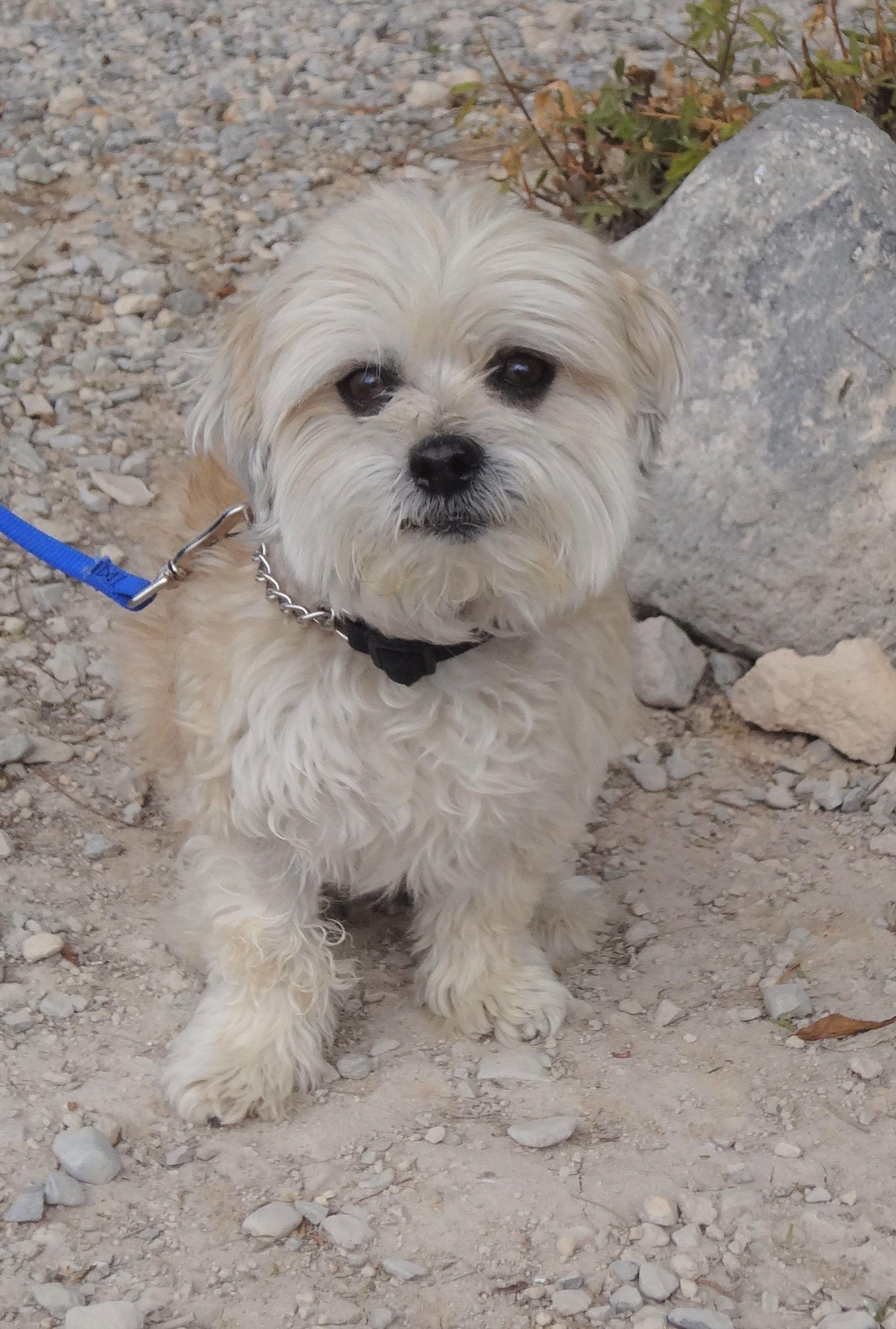Adopt Yogi On Animal Society Terrier Mix Dogs Pets