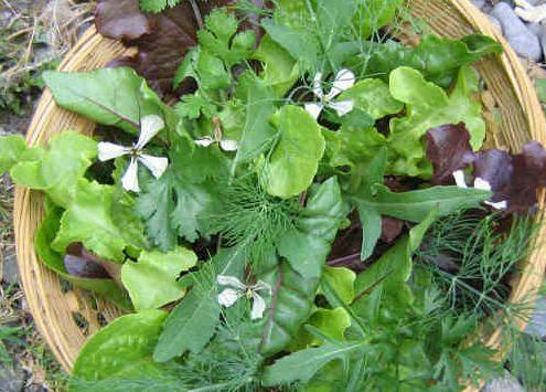 Useful Kidney Cleanse Herbs