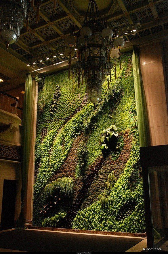 Vertical garden what a beauty