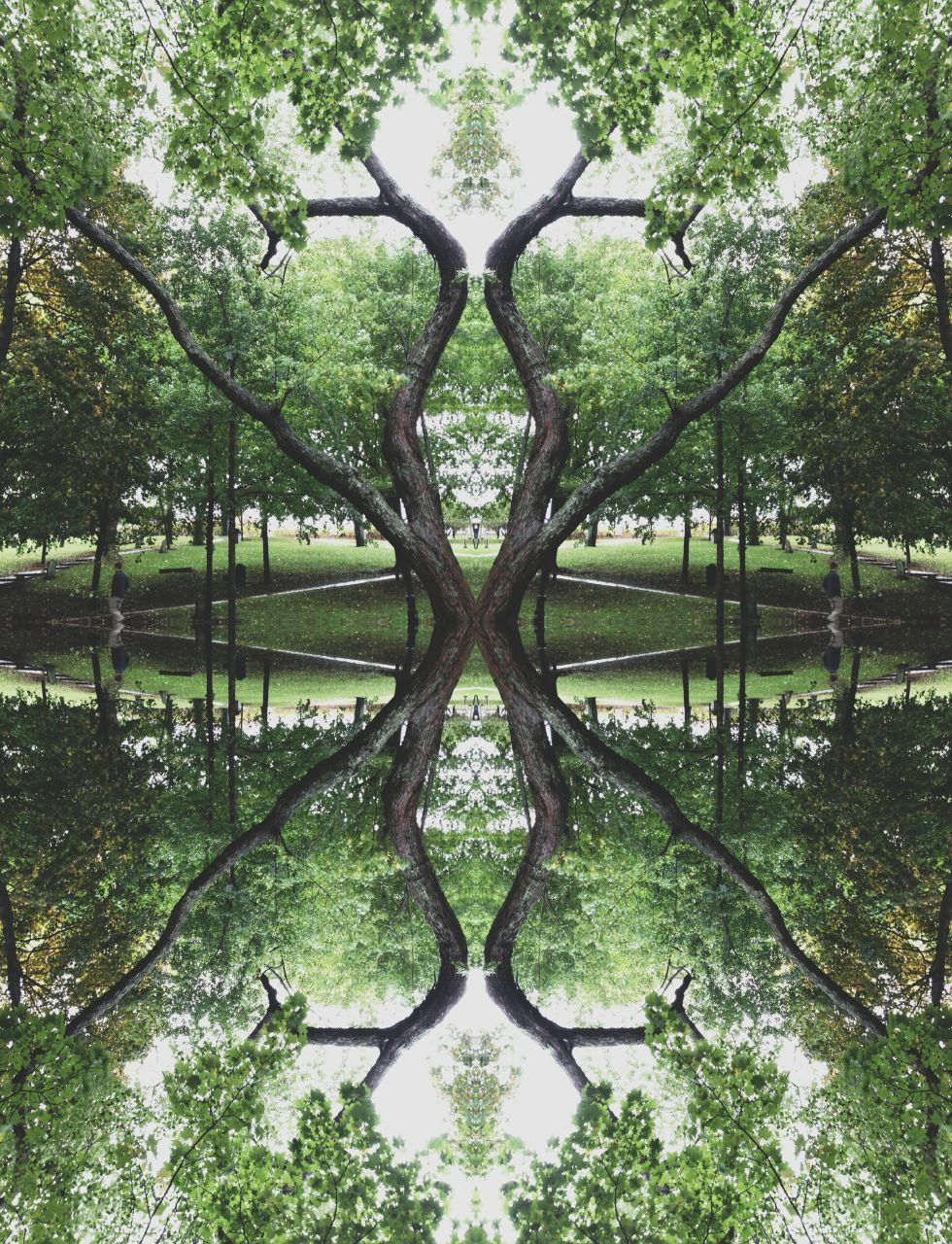 Reflected Trees, by Mike Capson of Saint John, NB.