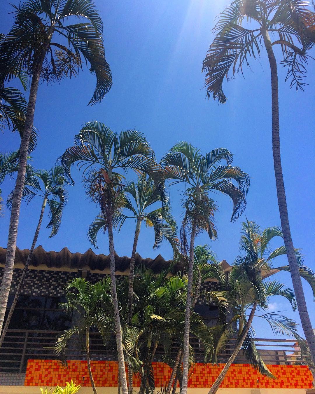 Viva Brasil #bestiestakebrazil #palmtrees #pictureperfect #tile #tileaddiction #filadelfia #governadorvaladares #minasgerais  #letthesunshine by alissajameson