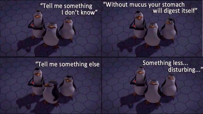 Tell Me Something I Dont Know Funny Madagascar Movie Penguins
