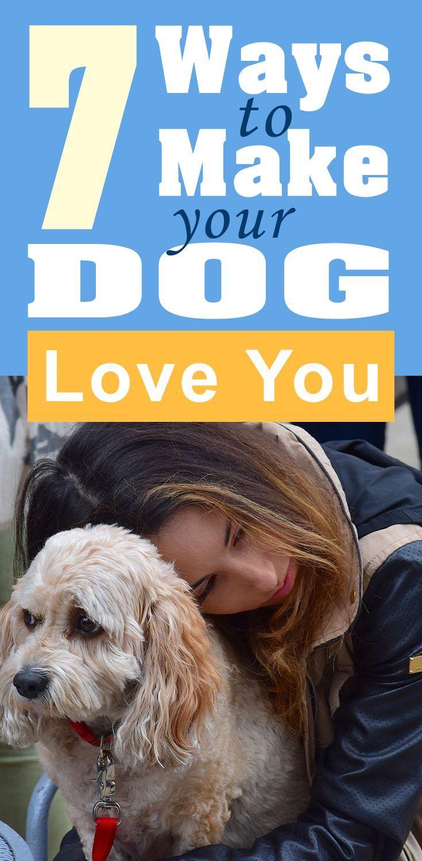 How to Make a Dog Love You forecasting