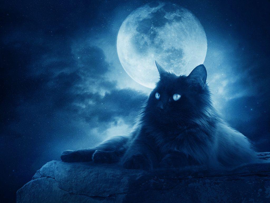 .:Midnight Wishes:. by moroka323 on DeviantArt
