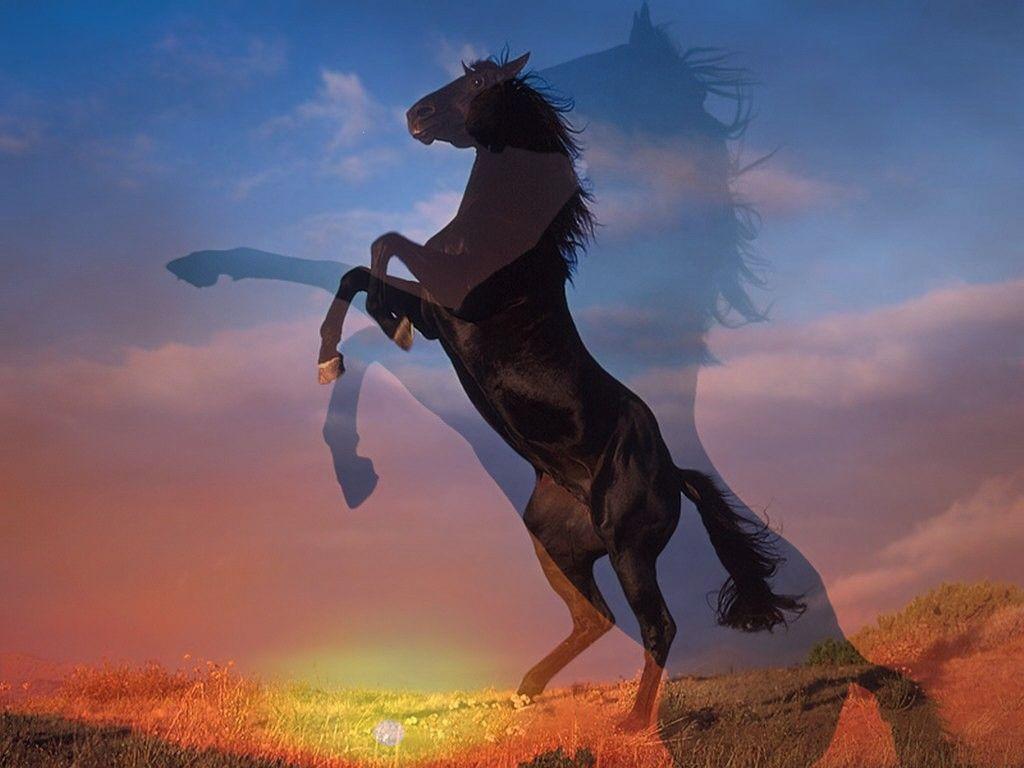 fond dcran cheval