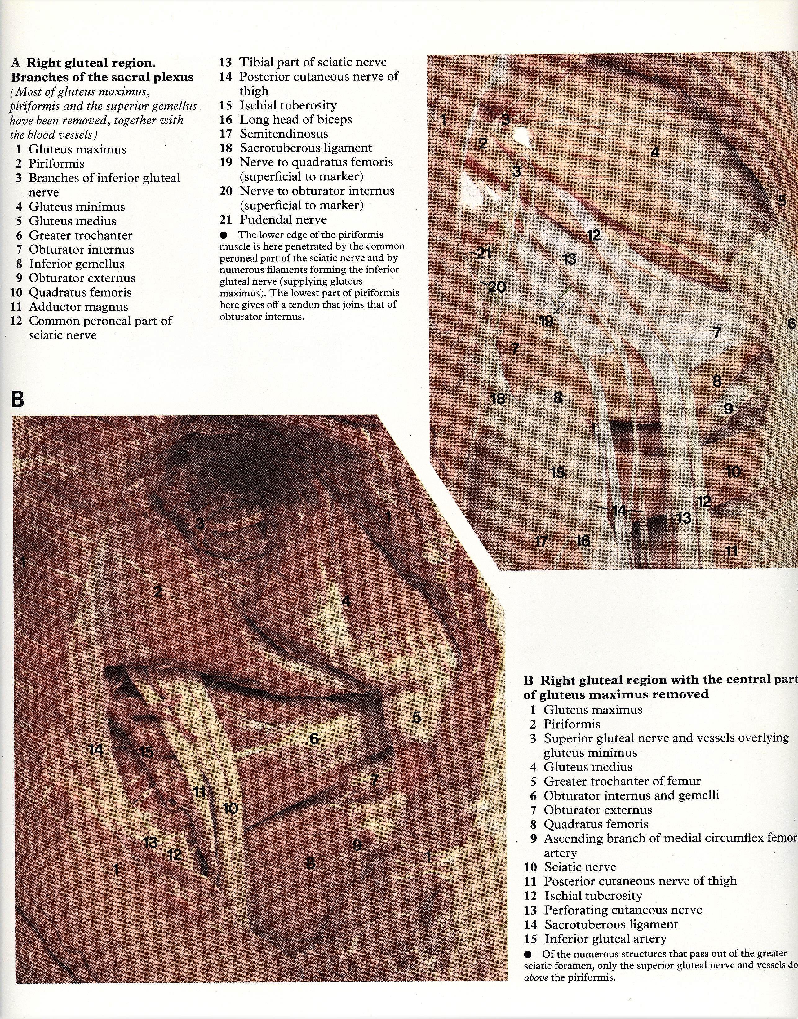 Pin By Bengt Sandberg On Part 6 Of 6 Lower Limb Atlas Of Human