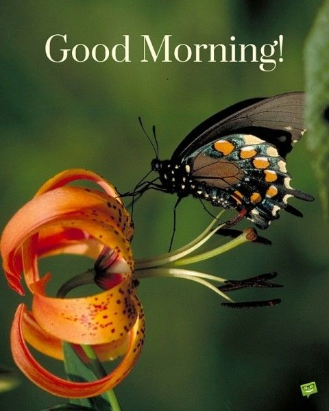 A Wish For The New Day Good Morning New Day Good Morning
