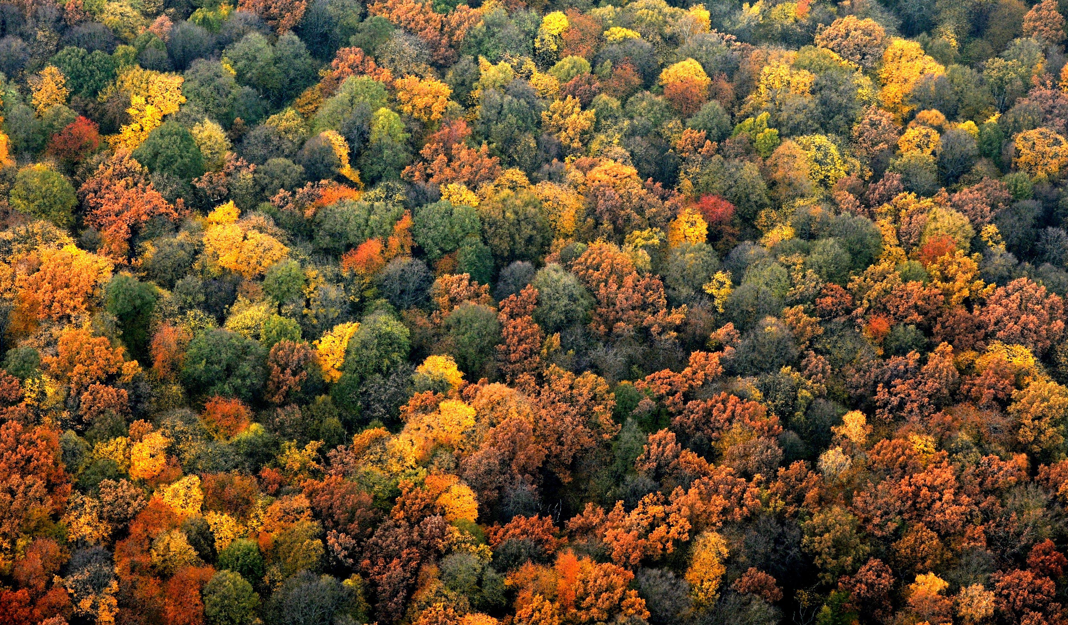 Der Herbst ist bunt. Die Laubbäume färben sich. Foto: Alexander Volkmann