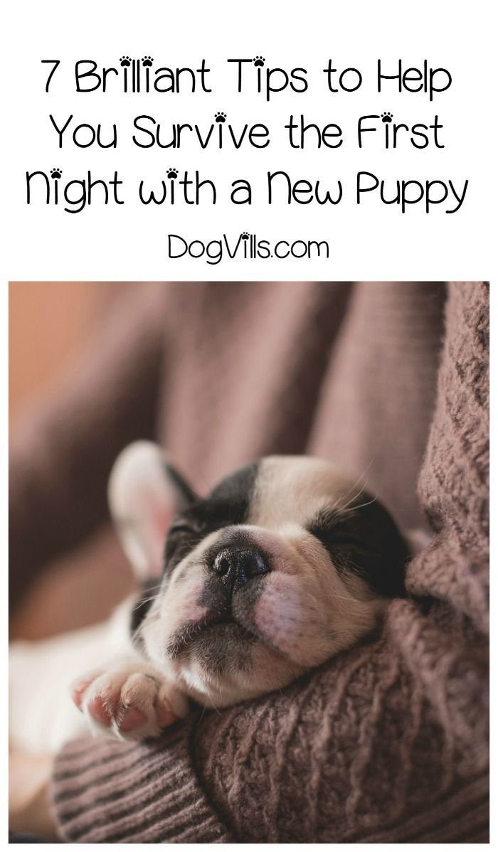 How To Survive The First Night With A New Puppy Dog Training