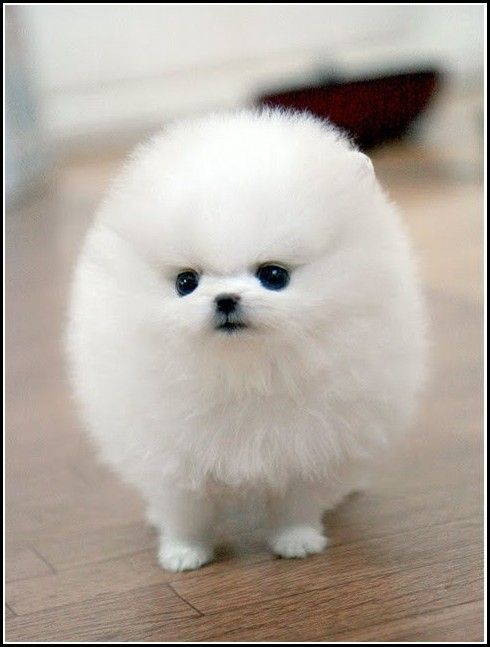 Such A Little Cutie With Images Baby Dogs Cute Baby