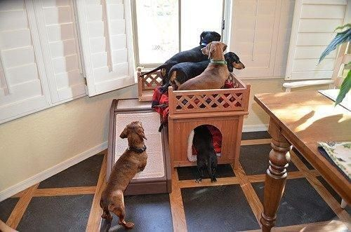 Durable pet home ideal for indoor or outdoor use. This dog
