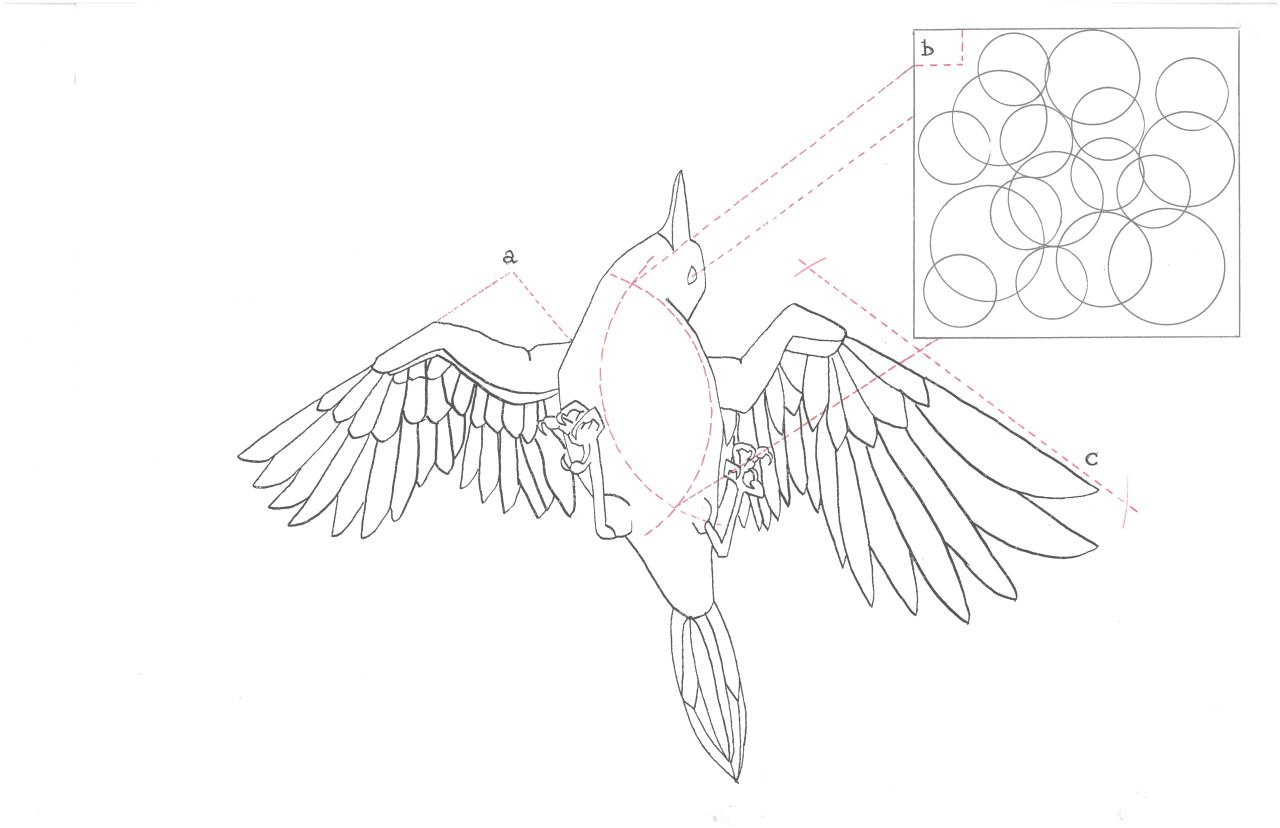 Peacock Bird Diagram Wiring For A Switch Bubble Exsanguinated Miriad Ca Philippa
