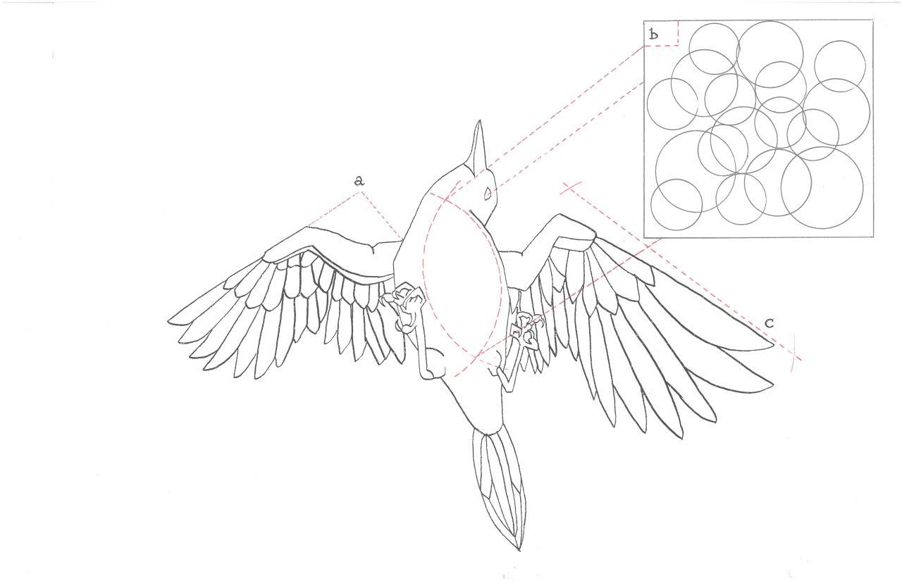 Bubble Exsanguinated Bird Diagram Miriad Philippa