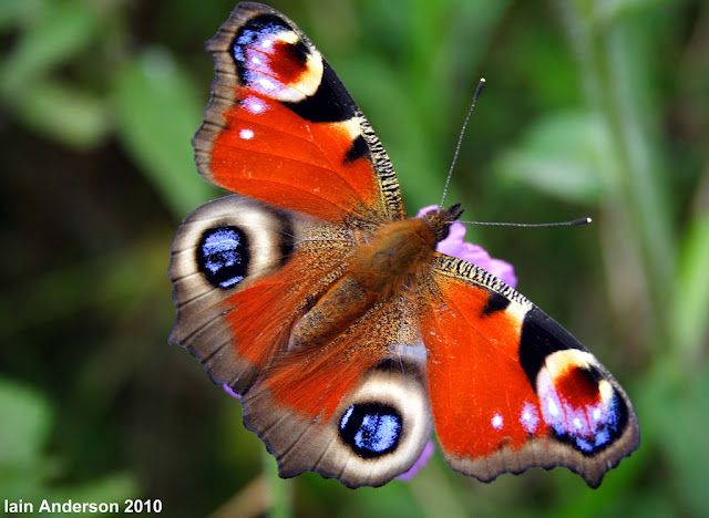 butterfly(11)