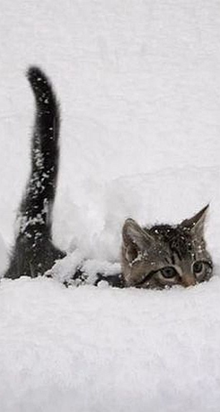 Cute Animal Pics For Your Friday Snow Cat And Animal - 13 super fluffy cats melting glass