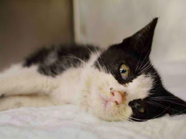 Gone Miley A1076541 Located In Manhattan Ny 2 Month Old Kitten In Need Of Medical Attention