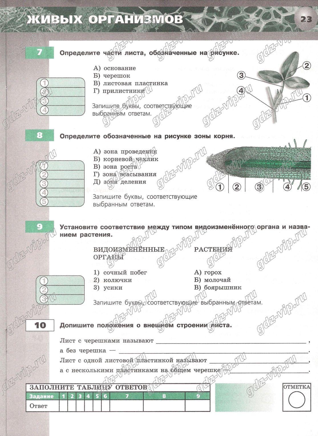 Гдз по русскому языку тасс баранов