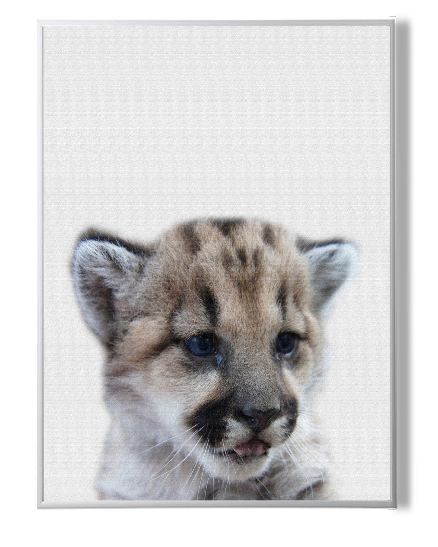 Nursery Decor,Lion cub Print,Nursery Decor art,Nursery Animal Art,lion Wall Decor,Safari Animal Print,Baby Wall Decor,Nursery Lion,Safari by YourPrintsShop on Etsy
