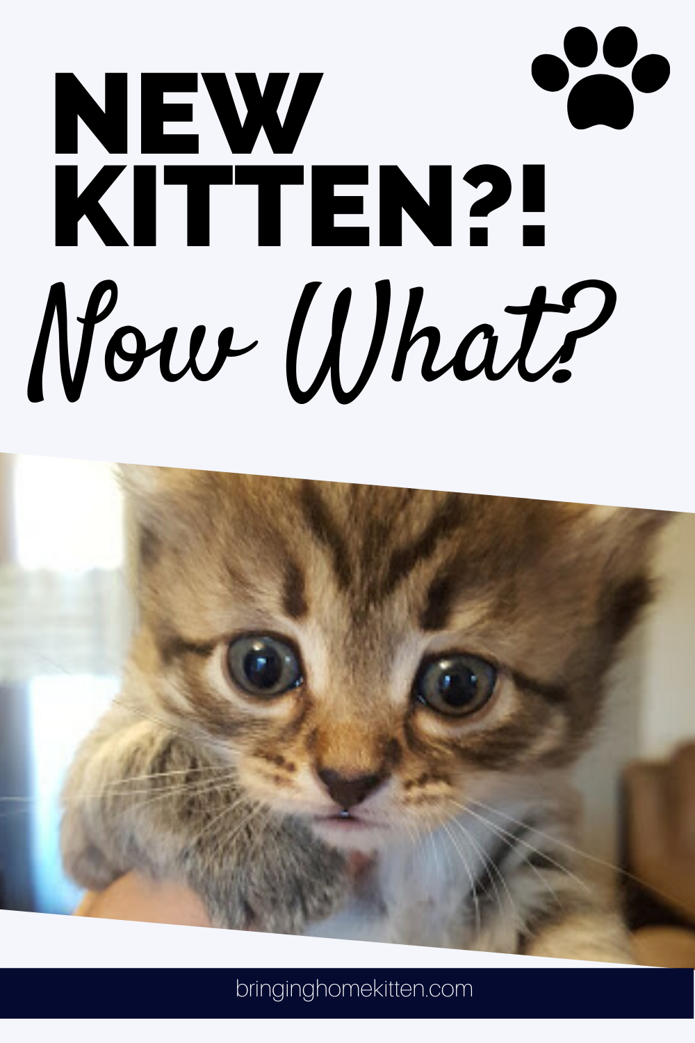 New Kitten Now What In 2020 Getting A Kitten First Time Cat Owner Kitten