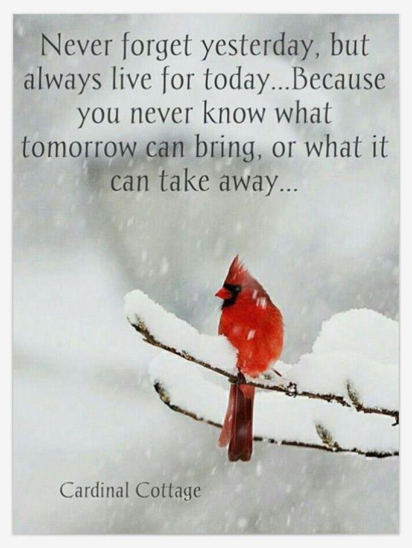 Live For Today Quotes Live For Today Quotes  Pinterest  Inspirational