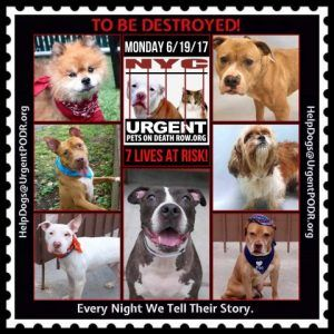 Dedicated to Saving NYC Shelter Animals Best dogs for